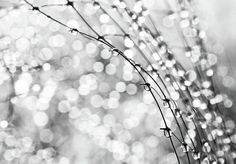 "Color Plata - Silver!!! ""After the Rain"" Photograph by Theresa Tahara"