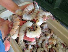 Rocky Point, Mexico Shrimp as big as your hand!