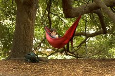 Studying, sunning and chilling in ENO hammocks take place every day amid the Horseshoe's trees. The care of those and all of the 7,700 trees on campus has earned the University of South Carolina the designation as a Tree Campus USA for a fourth consecutive year.
