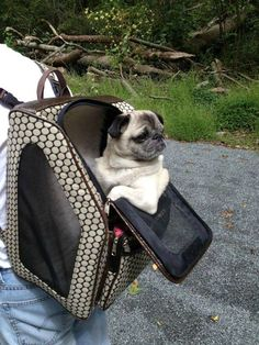 Pugs know they're cool ;-)
