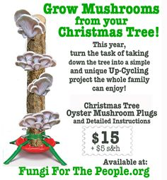 Grow your own mushrooms-I so want to do this!