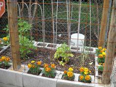 cement block raised garden, block garden, small gardens, garden boxes
