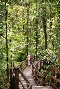 Daintree-Nationalpar
