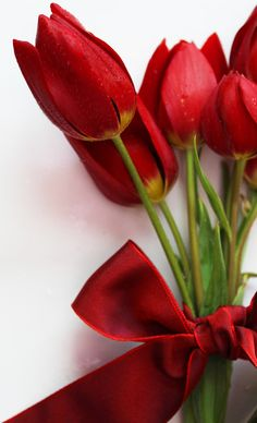love red tulips