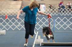Laura Jimison, 14, sends her Australian shepherd, Stormy, over a jump while competing in the rally course Tuesday at the Pueblo County Fair's dog show. (Chieftain photo by Mike Sweeney, July 2012)