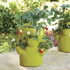 Strawberry-Succulent Pot in Planters & Gardening | Crate and Barrel