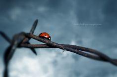 Barbed Bug by Stridsberg.deviantart.com on @deviantART