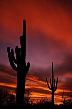 Sunset on the Desert. saguaro silhouettes. red, purple, orange, silhouette. #GeorgeTupak