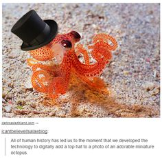 """All of human history has led us to the moment that we developed the technology to digitally add a top hat to a photo of an adorable miniature octopus."""