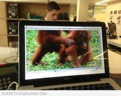 animals, laugh, funni quot, desktops, funni thing, pictur monkey, funni pictur, desktop safari, anim 29