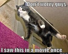 cats, boot, anim, funni, fan, kitty, trains, funny kitties, funny memes