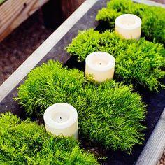 Easy centerpiece: Irish moss + candles