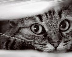 Precious kitty!