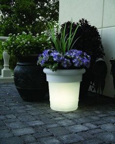 Glow in the dark planter. Chic!