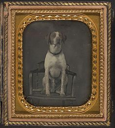 Daguerreotype of Dog Posing for Portrait in Photographer's Studio Chair, by Rufus Anson  (American),    ca. 1855