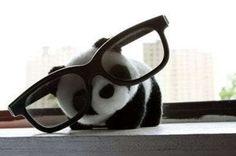The bigger the glasses, the bigger the geek. Panda wins again.