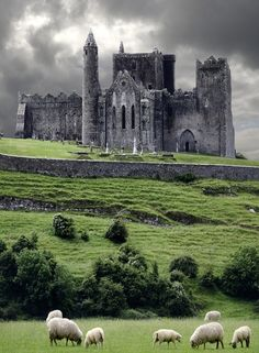A stop on my tour of Ireland. not my picture, but a beautiful view of it. The Rock of Cashel, Ireland