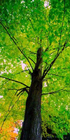 Refreshing green • photo: bark on Flickr