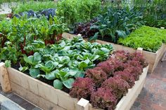 Raised bed veg garden