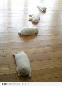 fluffi, puppies, anim, funni, pet, doggi, trail, ador, thing