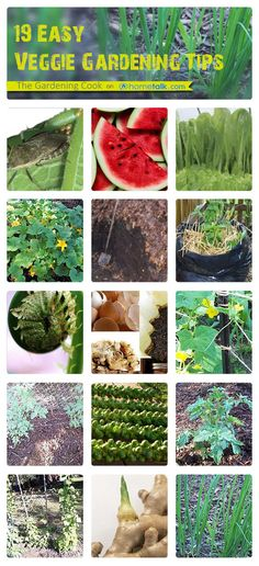 19 {Easy} Veggie Garden Tips | curated by 'The Gardening Cook' blog!