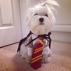 Gryffindor dog costume