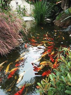 Beautiful koi pond in this landscape. Love the lively color the fish bring! Photo by Pam Spindola.