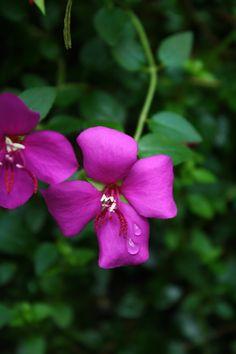 Botanical Gardens - Bronx, NY