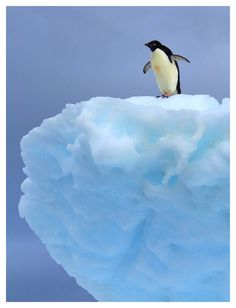Penguin Ice Wave. #penguin #animallovers #animals