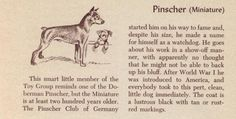 1954 book by Morgan Dennis