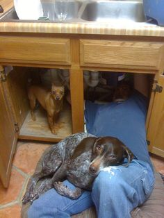 Helping with the plumbing...that's why we love pets!