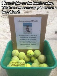 Honoring their dog..so touching..
