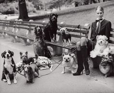 Vogue Daily — mix of dogs. Crazy dog lady