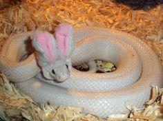 Bunny snake