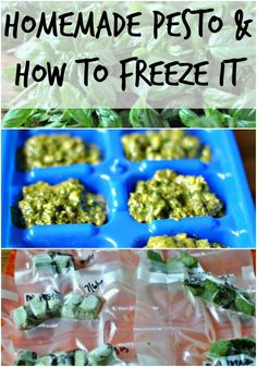Homemade Pesto and How to Freeze Pesto. A few quick and easy steps to turn that garden that is over flowing right now into fresh homemade pesto all year long.