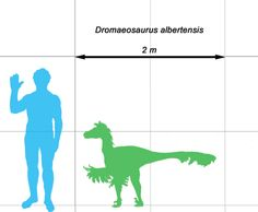 Dinosaurs vs People: Illustrated size comparisons between humans and dinosaurs.