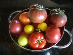 Todays Harvest 003 300x225 Recommended Vegetable Varieties