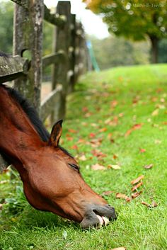 grass is always greener on the other side of the fence.. so they think...