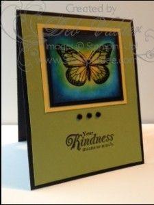 Best of Butterflies with Deb Valder