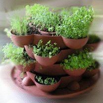 mini herb garden.