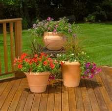 Container Garden for patio