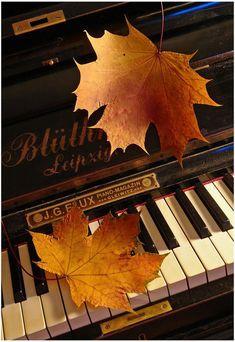 You love to play piano;o)