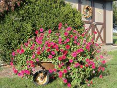 Rusty wheelbarrow ~ Garden Junk Forum - GardenWeb