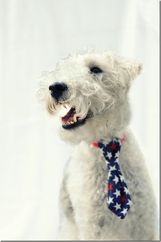 Easy Sew Dog Tie  Because Chief totally needs some patriotism in his life.