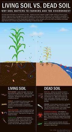 Organic nutrient rich soil on pinterest organic for Mineral soil vs organic soil