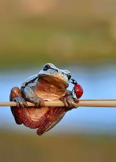 frog and ladybug hanging out together