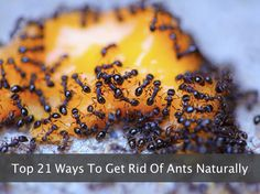 Top 21 Ways To Get Rid Of Ants Naturally....http://homestead-and-survival.com/top-21-ways-to-get-rid-of-ants-naturally/