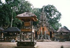 monkey forest bali - Google Search