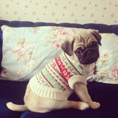 #pug #puppy in a sweater! adorable! dog lover, anim, dogs, pug puppies, pet, christmas sweaters, ador, cold weather, christmas pugs