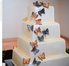 butterflys in white